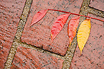 Wet leaves on the concrete in the back yard, autumn rain...Pistache