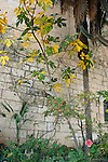 Israel, Jerusalem Mountaina. The garden at the Crusader Church in Abu Gosh