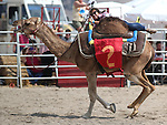 Taylor Pettaway races in a media exhibition round at the 56th annual International Camel &amp; Ostrich Races in Virginia City, Nev. on Friday, Sept. 11, 2015. <br /> Photo by Cathleen Allison
