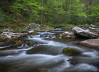 Great Smoky Mountains National Park, Tennessee:  Middle Prong Little River in early spring, near Tremont