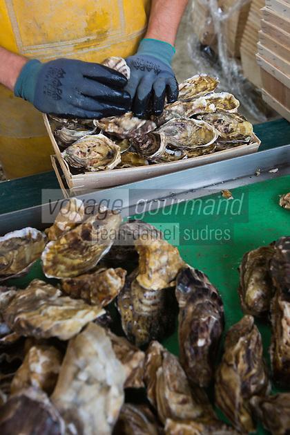 France, Ille-et-Vilaine (35), Cancale,Franck Vallerie ostréiculteur: Les Huîtres de Céline - Tri  des huîtres creuses de Cancale //France, Ille et Vilaine, Cancale,  Oyster farm: Les Huîtres de Céline: Cancale oysters, local oysters
