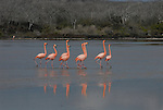 these flamingos did their balts dance