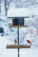 00585-02918 Northern Cardinal male & female & Carolina Chickadee on tray & hopper feeder in winter Marion Co.   IL