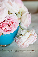Detail of the delicate heads of freshly cut light pink roses in a bright blue vase