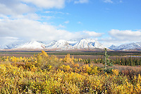 Broad Pass fall colors, Denali National Park, Alaska