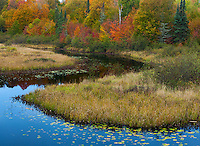 Chequamegon National Forest, WI<br /> Brunsweiler river winds thru wetlands at the forest edge, fall color