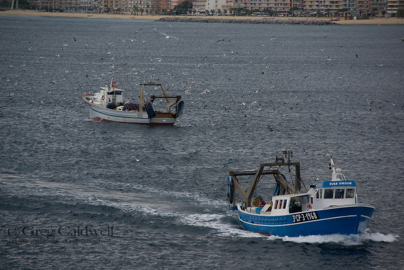 The gulls know which boat had the best day fishing in the bay of Palamos.