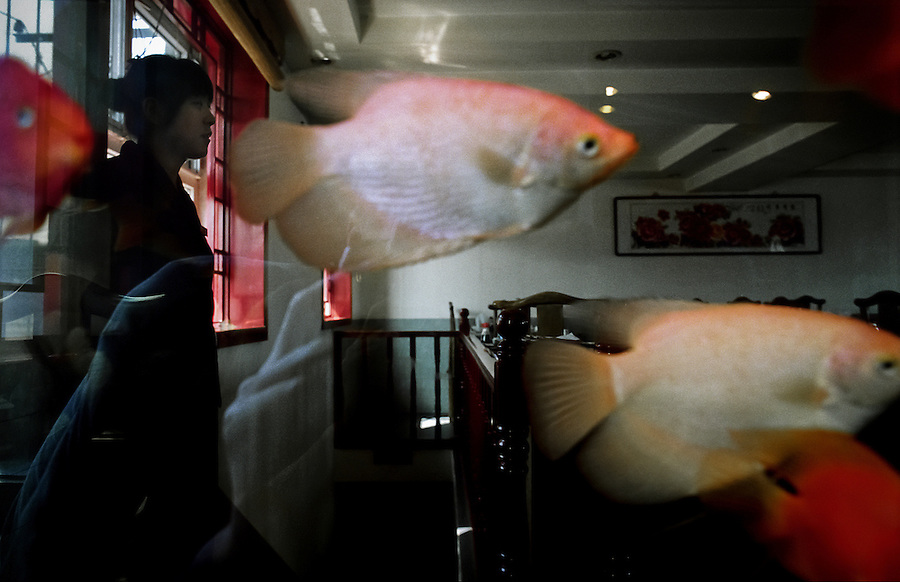 A waitress in a Beijing restaurant as seen through an aquarium.