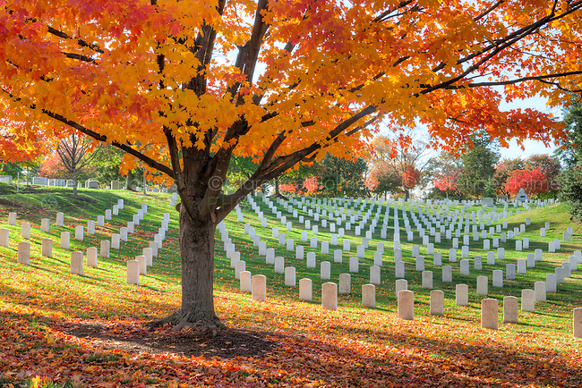 Maple trees add peak fall color to the grounds of Arlington National Cemetery in Arlington, Virginia.