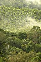 Floresta de Eucalipto(2º plano),  gênero de arbustos ou árvores de grande porte, da família das mirtáceas, usado  para plantio de extensas áreas de espécie para posterior produção de de papel e celulose  (grupo Orsa).<br />A fábrica da Jarí em local próximo,  onde é beneficiada a madeira, foi construída em cima de uma balsa e trazida por empurradores do Japão no final da década de 70 e instalada as margens do rio Jarí, fronteira do Pará com o Amapá.<br />Almeirim, Pará, Brasil.<br />Foto Paulo Santos/Interfoto<br />03/2005.