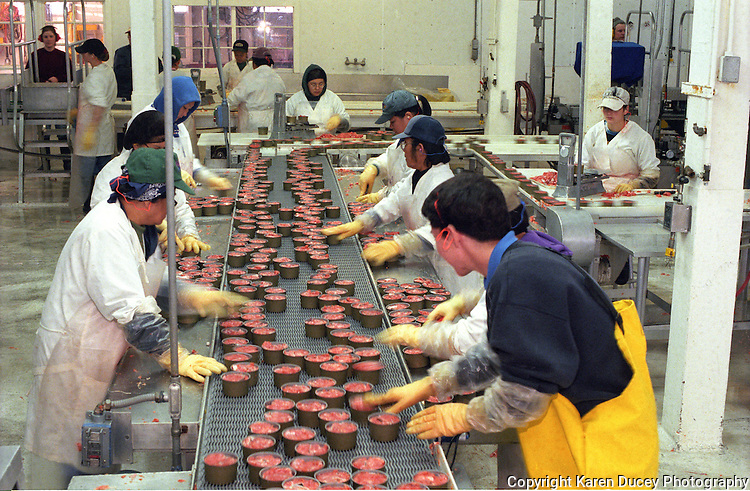 Cannery workers process salmon at the Trident Processing plant in South Naknek, Alaska