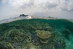 Split level coral reef shallows.Rowley Shoals, Western Australia