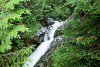 Fast flowing stream amongst rocks and undergrowth. Deep Cove,Vancouver, British Columbia, Canada.
