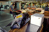 A fish waits to be cleaned and filleted at a counter in  Tsukiji Wholesale fish market n Tokyo, Japan. September 24th 2005