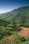 Rugged green hills and terrain on the west end of Santa Cruz Island, Channel Islands, California