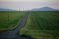 A farm road stretches between wheat fields to the horizon outside of Great Falls, Montana, USA.