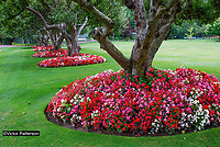 Butchart Gardens, National Historic Site of Canada,  Brentwood Bay, Vancouver Island, Canada, 200809091169, flowers, shrubs, trees, flower beds.<br />