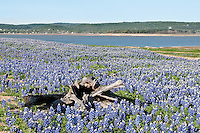 Bluebonnets, Texas Hill Country
