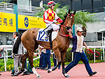 Horse Victor Emperor ridden by Alvin Ng Ka-chun prior to the Race 4, Lung Wui Handicap, at the Sha Tin Racecourse on 03 September 2017 in Hong Kong, China. Photo by Marcio Rodrigo Machado / Power Sport Images