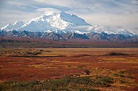 Brilliant fall color of the subarctic tundra in the fore ground of Mt. McKinley, Summit 20,320 ft, known as The High One or Denali.  Denali National Park, Alaska USA