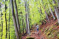 Trail running in thick green forest above Interlaken, Switzerland