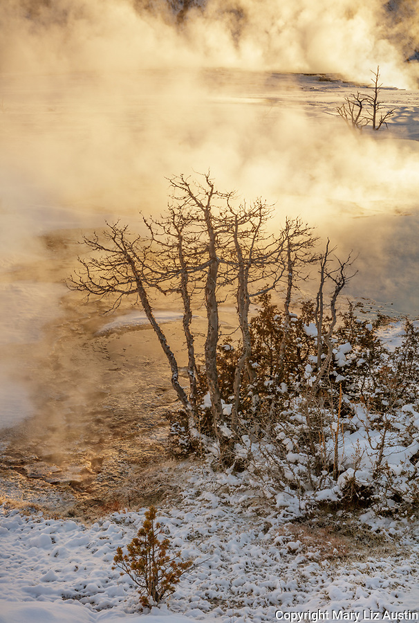 Yellowstone National Park, WY: Sunrise lights up the steam from the thermal pools on the upper terraces of Mammoth Hot Springs