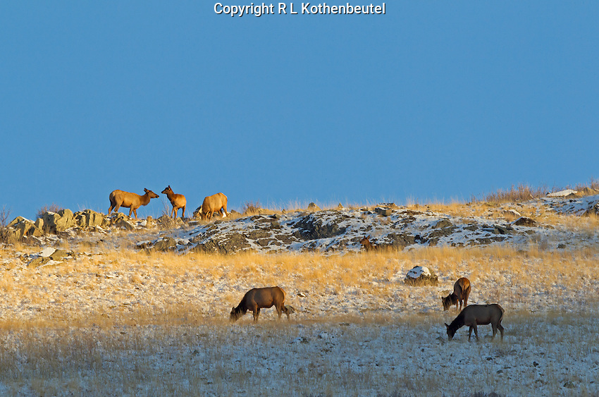 National Bison Range near St. Ignatius, Montana<br /> 11/13/2014