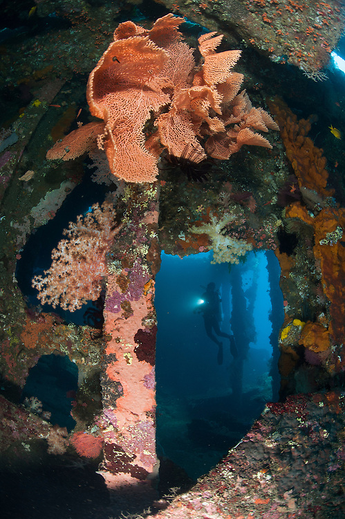 Atmospheric ccene from the Liberty wreck, Tulamben, Bali