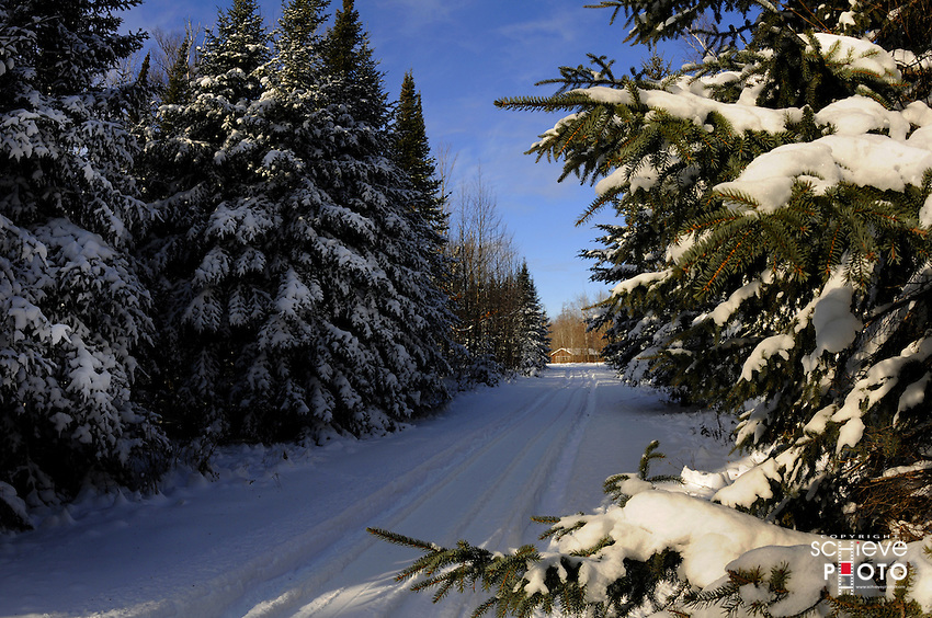 Snow covered evergreen trees in Wisconsin's northwoods.