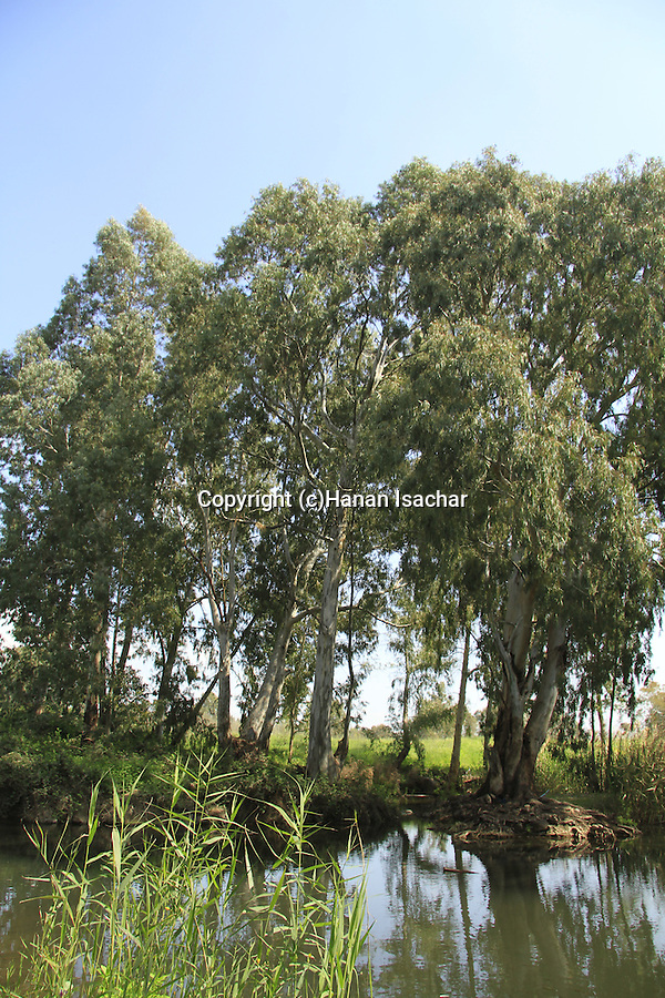 Ein Tznobar (Ein Reuven) in the Golan Heights