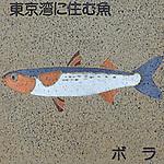 Fish living in Tokyo Bay.