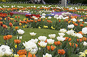 Luiz, FLOWERS, photos, BRLH8697,#f# Blumen, Natur, flores, naturaleza