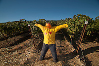 Scarecrow, Stillwater Creek Vineyard, Royal City, Washington, US