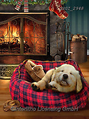 GIORDANO, CHRISTMAS ANIMALS, WEIHNACHTEN TIERE, NAVIDAD ANIMALES, paintings+++++,USGI2948,#xa# ,dog,dogs