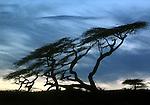 LAKE LANGANO - ETHIOPIA - 16 APRIL 2004 -- Sunset at the Lake Langano in the East African Rift Valley. --PHOTO: JUHA ROININEN / EUP-IMAGES