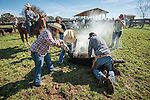Calf branding and marking with the Busi family at their ranch near Jackson, Calif. (Stony Creek corral)