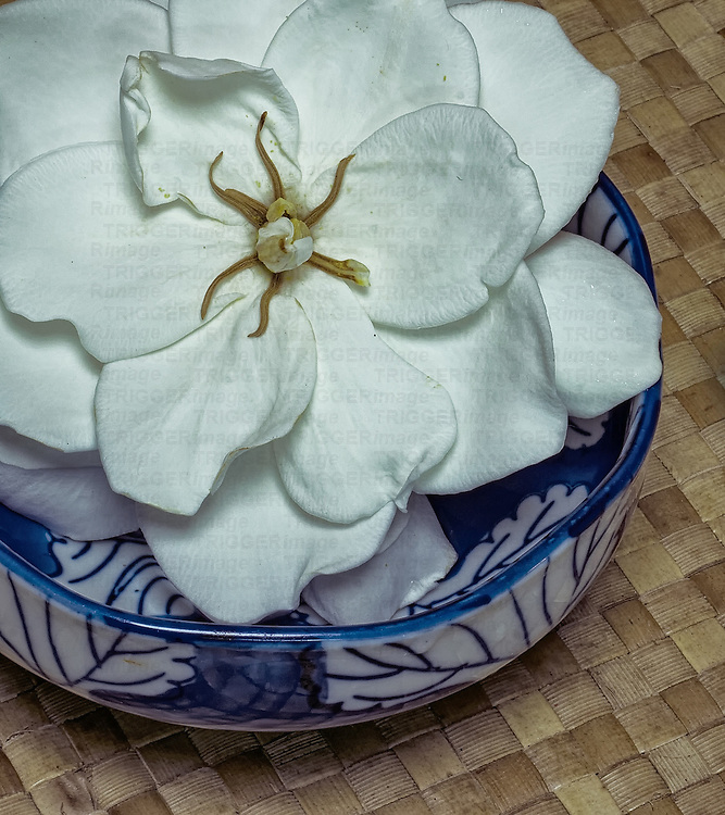 Conceptual image made from natural products
