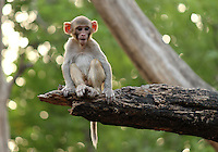 Small monkey sitting on a tree branch gazing curiously.