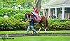 Ile St. Molly before The Delaware Oaks (gr 2) at Delaware Park on 7/13/13