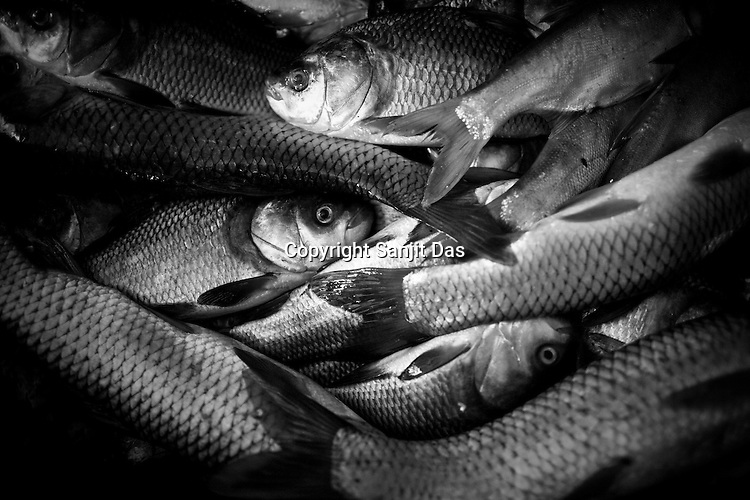 Locally caught fish seen in the fish market in Dibrugarh city, North east state of Assam in India. Photo: Sanjit Das