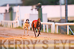 Jeffs Whister.(No 1) passes.the line in the.Kerry Group Hospital.Sweepstake.Final on.Friday night at.Kingdom Greyhound.Stadium,.Tralee, in aid of.Kerry General.Hospital.