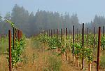 vineyard in Bonny Doon