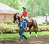 Miss Moonshine in the paddock at Delaware Park on 5/22/13