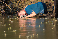 Woman photographs the swarming of the long-tailed mayfly (Palingenia longicauda) on the river Tisza in Tiszainoka (some 135 km south-east from Budapest), Hungary on June 23, 2013. ATTILA VOLGYI<br /> The long-tailed mayfly larves live 3 years under water level in the river banks then swarm out for a one day period of their life to die after mating.