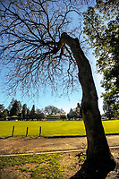 Queen Elizabeth Park in Masterton, New Zealand on Wednesday, 26 July 2017. Photo: Dave Lintott / lintottphoto.co.nz