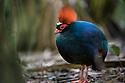 Borneo: Birds