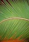 Detail of a palm frond, Bora Bora, French Polynesia