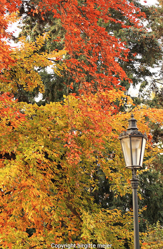 Autumn colors in orange and yellow as backdrop for an old iron street lamp