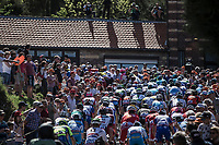 Peloton: First run up of the infamous Mur de Huy.<br /> <br /> 82nd La Fl&egrave;che Wallonne 2018<br /> 1 Day Race: Seraing - Huy (198,5km)
