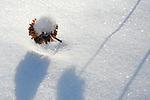 Snowy Bee Balm